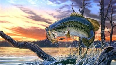 Largemouth Bass Wallpaper for Desktop (42+ images)
