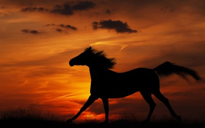 Horse Wallpaper Images (63+ images)