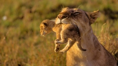 HD Funny Animal Wallpapers 1080p (60+ images)