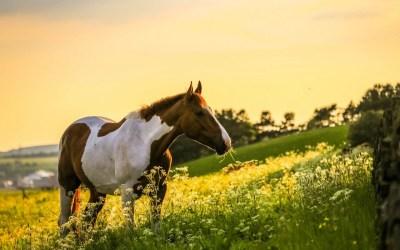 Fall Horse Wallpaper (42+ images)