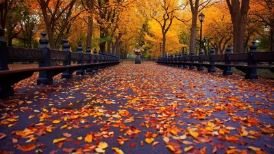 Cute Fall Wallpaper Backgrounds (60+ images)