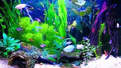 Aquarium Live Wallpaper Windows 10 (55+ images)
