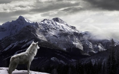 Wolf Wallpaper for iPhone (72+ images)