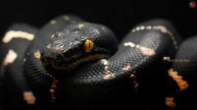 Cool Snake Wallpapers (65+ images)
