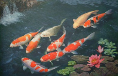 Koi Live Wallpaper for PC (41+ images)