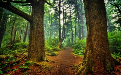 Nature Forest Wallpaper (56+ images)