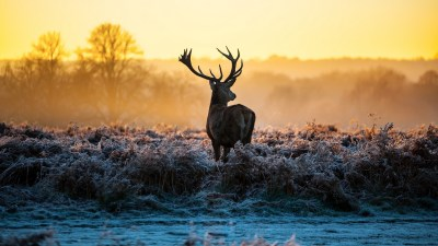 Whitetail Deer Wallpaper Screensaver (47+ images)