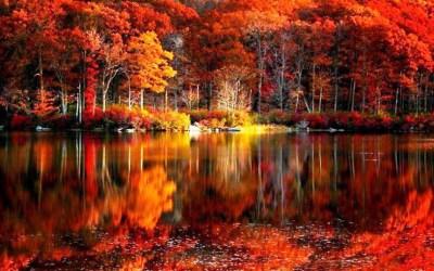 Desktop Wallpaper Autumn Leaves (65+ images)