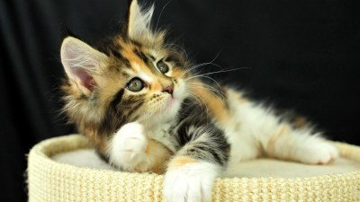 Cute Kitten Background (59+ images)