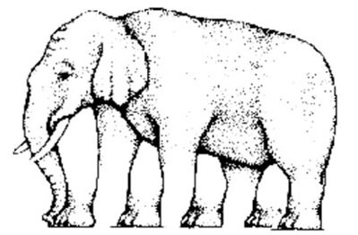 Hoeveel poten heeft de Olifant?