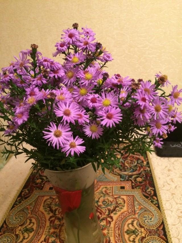 цветы от елены (10)