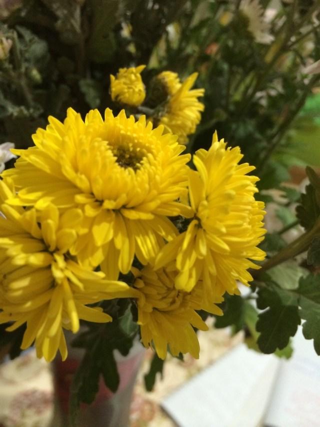 цветы от елены (14)