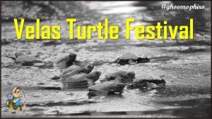 Velas Turtle