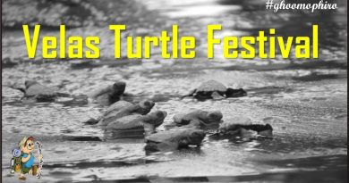 Get ready to witness the wonderful sightings of Olive ridley turtles at Velas Turtle Festival