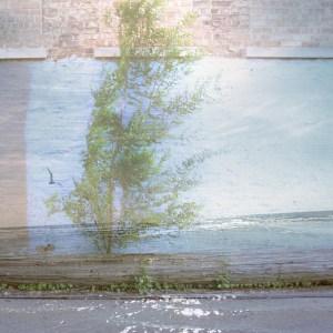 Options - driftwood metaphor
