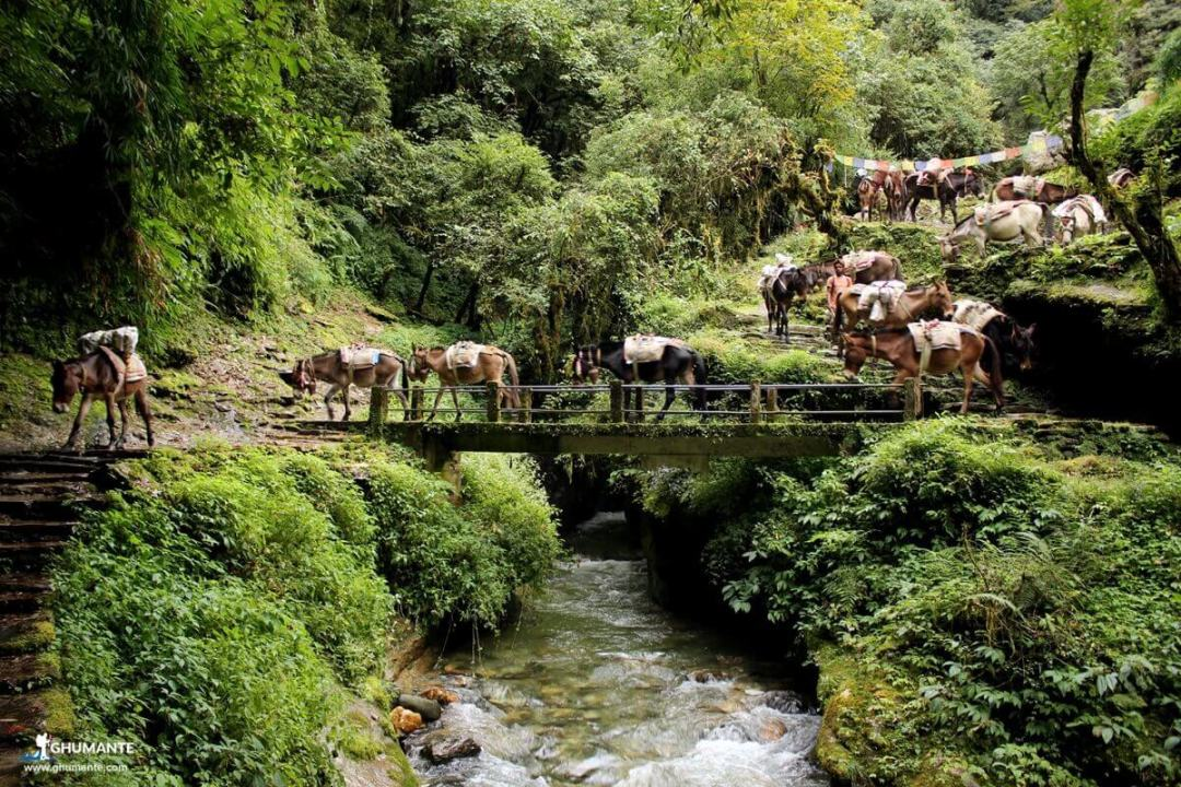 Ponies crossing the bridge
