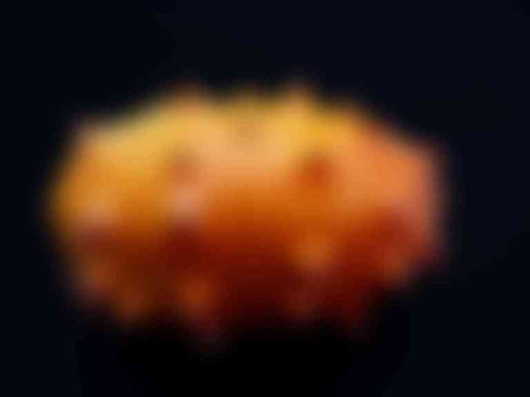 kiwano-101499_1920-compressed