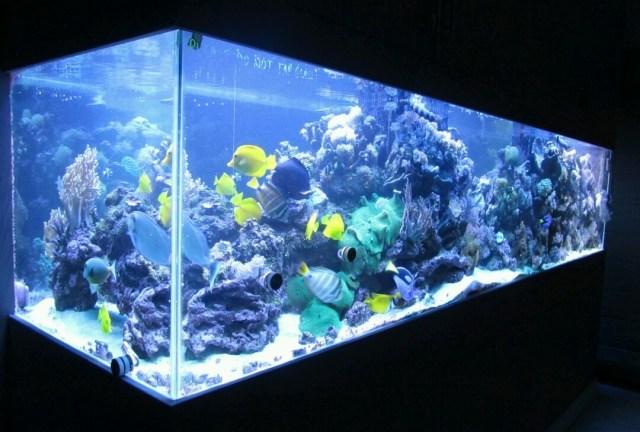 550 gallon custom saltwater aquarium | giant aquariums
