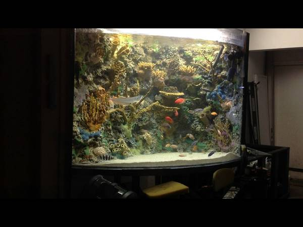 Call fast $2,200. 40d x 48h x 60L. Tank and stand total height 7 feet