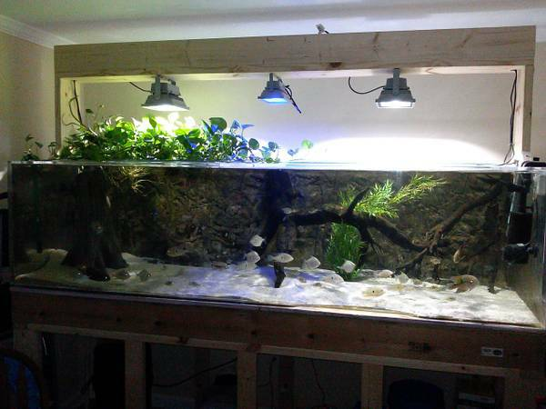 have for sale a 350 96 longx36 widex24 tall acrylic aquarium fish