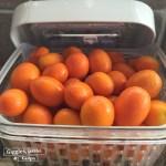 OXO Greensaver storing kumquats