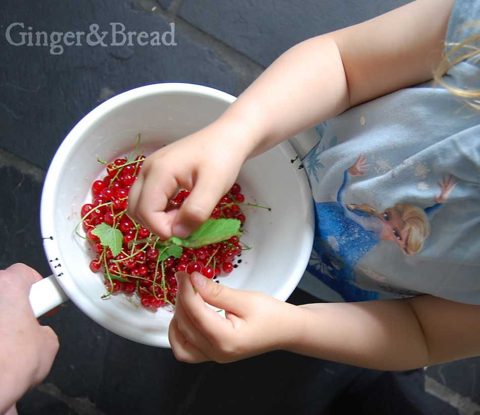 red-currant-harvest