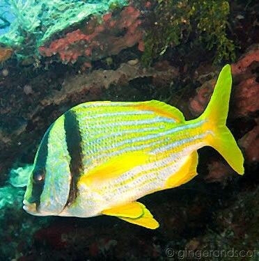 A Week of Scuba Diving in Roatan (Honduras)