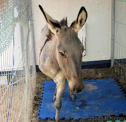 Wonkey Donkey