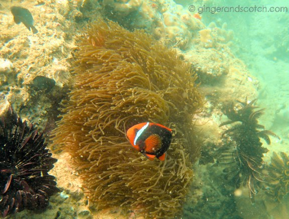 Diving Hoi An