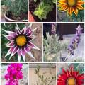 Garden plants that have gone to a better place