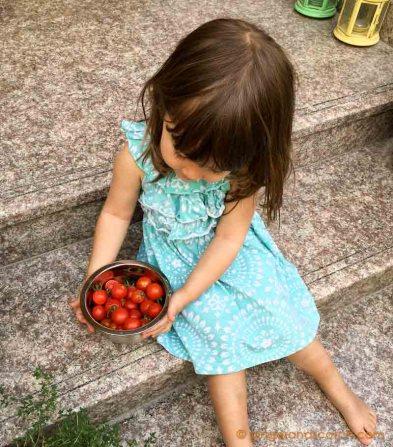 Cherry Tomatoes April 2016