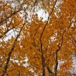 Feuillage à l'automne