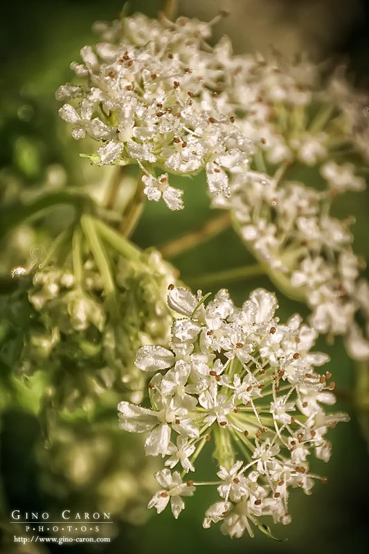 20110608062350_fleurs.jpg