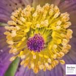 Macro d'une fleur
