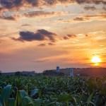 Soleil, ferme et maïs