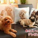 ペットの写真でオリジナルクッション☆プレゼントは「van der Wan」(ファンデルワン)で!