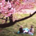 友達と!会社で!お花見シーズンの定番グッズや便利グッズでみんなに春をプレゼント☆