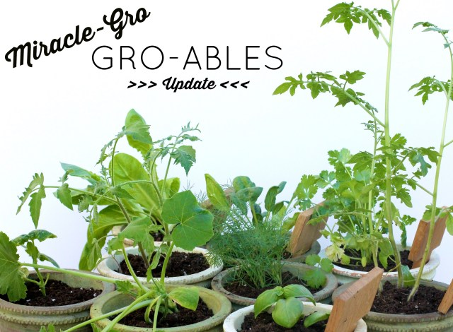 Miracle Gro Groables | girl about columbus