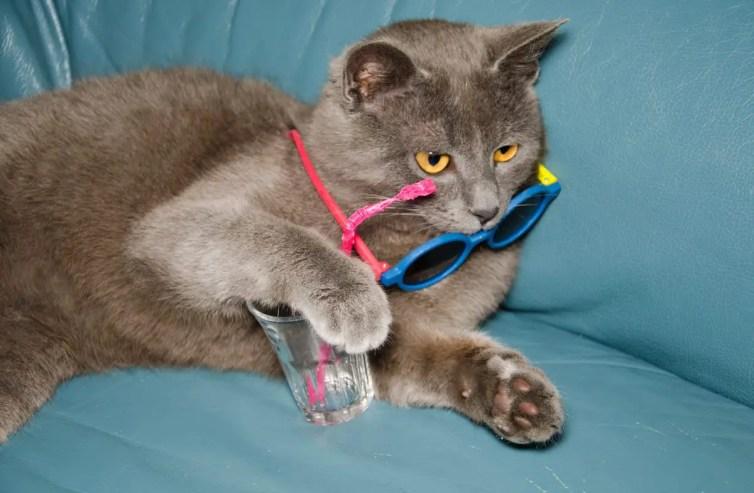 Simpatico gatto con bibita e occhiali da sole