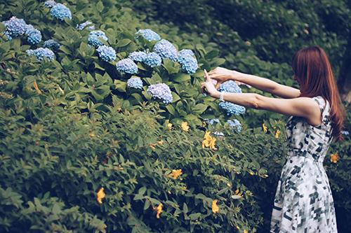 紫陽花(あじさい)の構図を決める女の子のフリー写真素材(商用可)