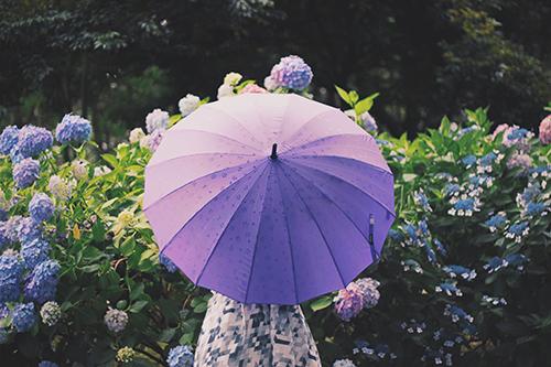 雨のなか紫陽花(あじさい)を眺める傘をさした女の子のフリー写真素材(商用可)