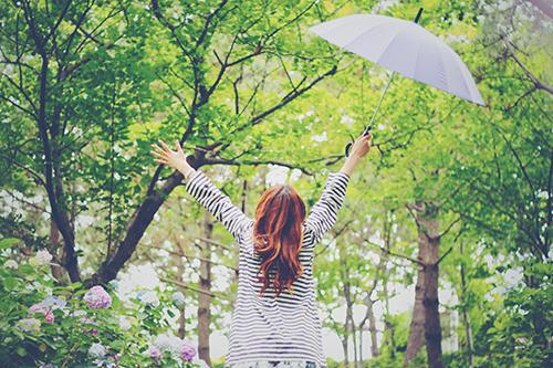 雨に濡れた紫陽花(あじさい)と葉っぱのフリー写真素材(商用可)