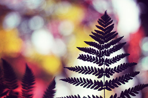 色とりどりの森の中でクリスマスツリーのような葉っぱのシルエットのフリー写真素材(商用可)