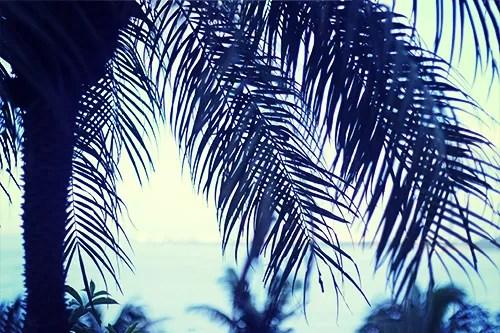 ヤシの木ごしに眺める夏の海のフリー写真素材(商用可)