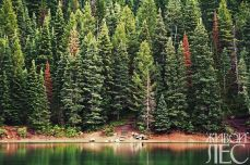 forest-1031113_960_720
