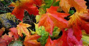 autumn-2-1382506