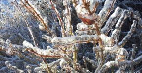 уход за деревьями зимой