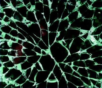 Point of failure in a sheet of toughened glass due to NiS inclusion.