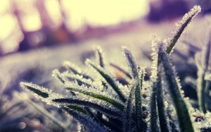 wallpaperscraft.ru трава лед заморозки погода