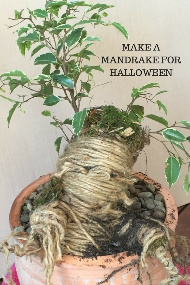 making a mandrake picture